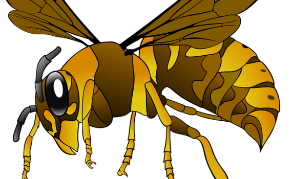 Croydon Pest Control Wasps